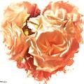 The Glow Of Roses by Debra Lynch