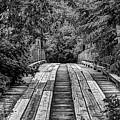 The Goatman's Bridge by JC Findley