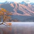 The Golden Tree by Robert Green