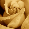 The Golden Vintage Rose by Jennie Marie Schell