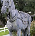 Horse At The Grand Oaks Resort by Warren Thompson