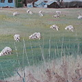 The Grazing Sheep by Francois Fournier