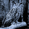 Majestic Great Horned Owl Bw by Mona Stut