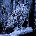 Majestic Great Horned Owl Blue Indigo by Mona Stut