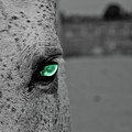 The Green Eyed Horse by Matthieu Russell
