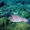The Green Garden Fish by Michael Scott
