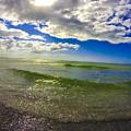 The Green Sea by Amanda Liner