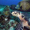 The Green Turtle And The Angelfish by Matt Swinden