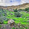 The Greening Of The Las Llajas Trail  by Lynn Bauer