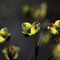 The Greening by Sari Sauls