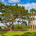 The Grounds Of The Kingsley Plantation by John M Bailey