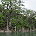 The Guadalupe River by Teresa Blanton