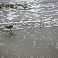 The Gulf In Shades Of Gray - On The Edge by Lucyna A M Green