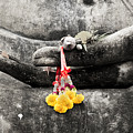 The Hand Of Buddha by Adrian Evans