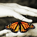 The Hands And The Butterfly