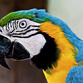 The Happy Macaw by Craig Tata