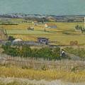 The Harvest Arles  June 1888 Vincent Van Gogh 1853  1890 by Artistic Panda