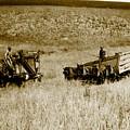 The Harvest by Randi Seaman