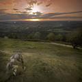 The Herefordshire by Angel Ciesniarska