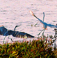The Heron And The Egret by Steve Karol