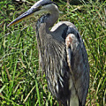The Heron by Norman Vedder