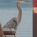 The Heron Of The Doc by Roxanne Basford