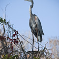 The Heron Perch by Chad Davis