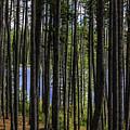 The Hidden Lake by Joseph Yvon Cote