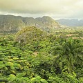 The Hills Of Vinales by Mary Buck
