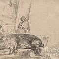 The Hog by Rembrandt Van Rijn