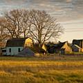 The Homestead by Steve L'Italien