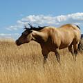 The Horse by Ernie Echols