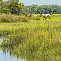 The Horses Of Cumberland Island by Paula Porterfield-Izzo