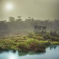 The Horton Plains. Sunrise by MotHaiBaPhoto Prints