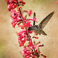 The Hummingbird And The Spring Flowers  by Saija Lehtonen
