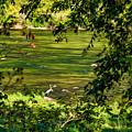 The Hunter - Paint by Steve Harrington