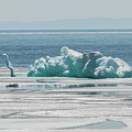 The Ice Elephant Of Silver Islet by Linda Ryma