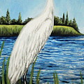 The Island's Egret by Elizabeth Robinette Tyndall