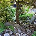 The Japanese Garden by Charles Stuart