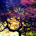 The Japanese Maple by Ed Weidman