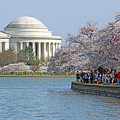 The Jefferson Memorial With Cherry Blossoms And A Lot Of People by Cora Wandel