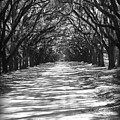 Live Oaks Lane With Shadows - Black And White by Carol Groenen