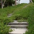 The Journey Secret Steps by Michael Rados