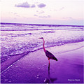 The Joy Of Ocean And Bird 2 by Shannon Sears