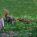 The Jump Show Off To Squirrel by Dan Friend