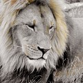 The King by George Silaghi
