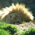 The King Of The Jungle by Reel Shots