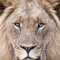 The King by Tom Broadhurst