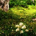 The Land Of Enchantment Tirol Austria by Gerlinde Keating - Galleria GK Keating Associates Inc