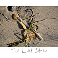 The Last Straw by Peter Tellone